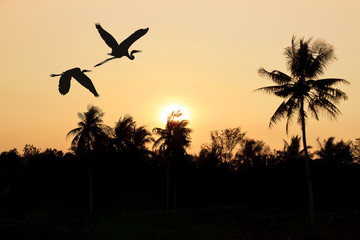 silhouette flying birds through the village at sunset