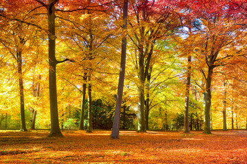 Wall Mural - Buntes Herbstlaub im Wald
