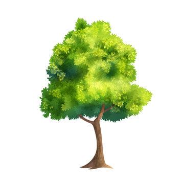 Color Vector Tree