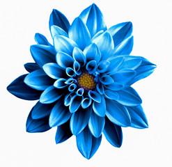 Fotobehang Dahlia Surreal dark chrome blue flower dahlia macro isolated on white