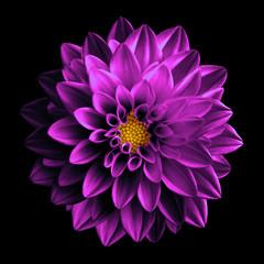 Keuken foto achterwand Dahlia Surreal dark chrome pink flower dahlia macro isolated on black