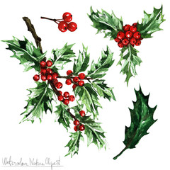Poster Waterverf Illustraties Watercolor Nature Clipart - Holly Berry