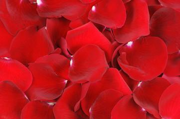 red rose petal background