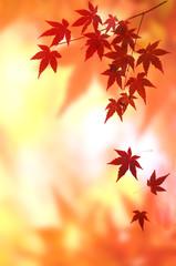 モミジの紅葉 背景素材