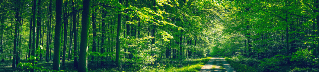 Trees by a road in a green forest