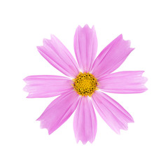 Light pink flower with a yellow core on a white background