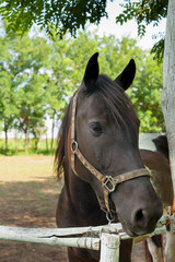Portrait of beautiful brown mare