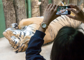 woman photographing a tiger behind glass