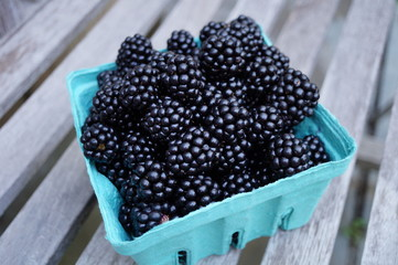 Freshly picked blackberries in blue pint containers