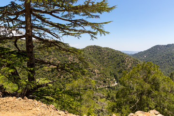cedar valley in Cyprus mountains