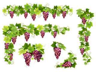 Set of bunches of red grapes. Cluster of berries, branches and leaves. Vector illustration about harvest and wine making. Fototapete