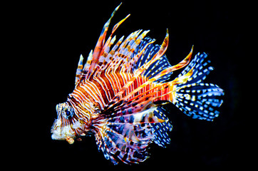 Colorful fish on black background