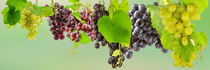 Wall Mural - grappes de raisins