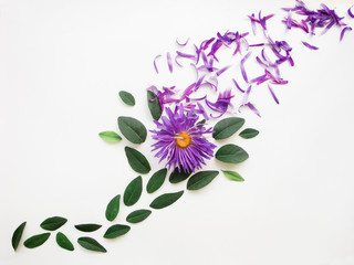 Background with summer flower and leaves. There is a place for text