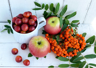 Gifts of autumn: apples, cherry plum, mountain ash on a white background. Still life in yellow, orange, red.