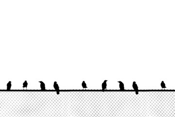 Birds sitting on chain link fence
