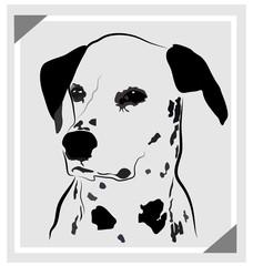 Dog dalmatian portrait logo