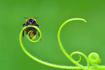 Bee  portrait - Stock Image