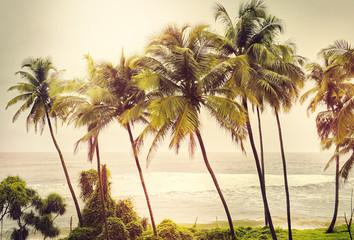 Palm trees at sunset light. Goa. India vintage style photo. Inst