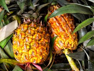 pineapple closeup