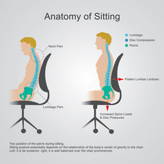 anatomy of sitting