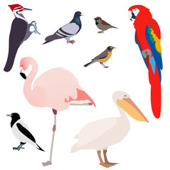 poultry, many different species of birds on a white background ,