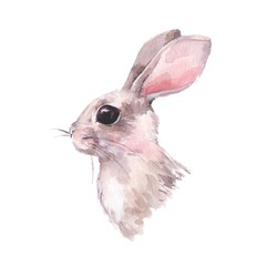 Cute hand drawn rabbit. Watercolor painting