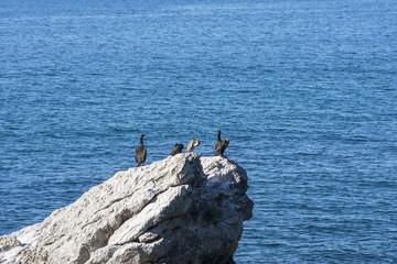 cormorani sullo scoglio