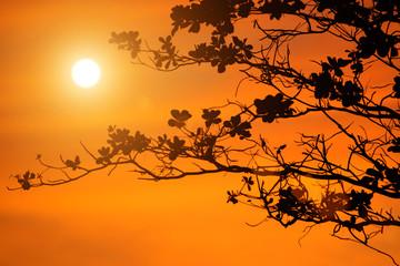 tree branches on orange background