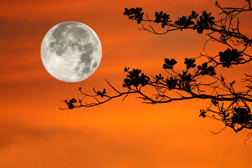 tree branches on orange background and big moon.