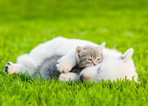 sleeping  White Swiss Shepherd`s puppy hugging small kitten on green grass
