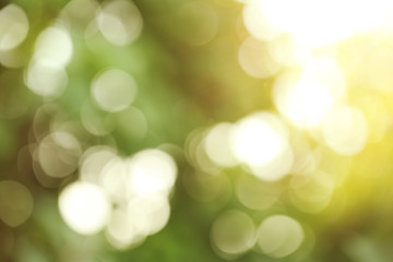 Bokeh of abstract green nature background