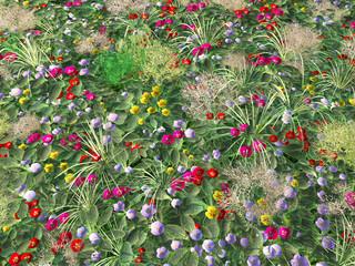 Blumenwiese von oben
