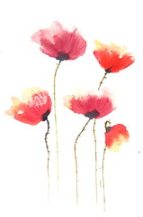 Stylized poppies on white, watercolor painting