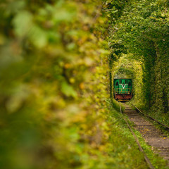 Beautiful tunnel. Same Train running in Natural tunnel of love formed by trees in Klevan, Ukrain.
