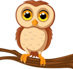 Cute owl on a tree branch