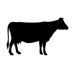 Cow, shade picture