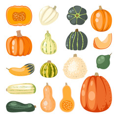 Pumpkin set vector.