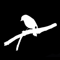 Bird on Branch - Silhouette negative image