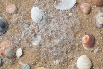 sea shells closeup on sand