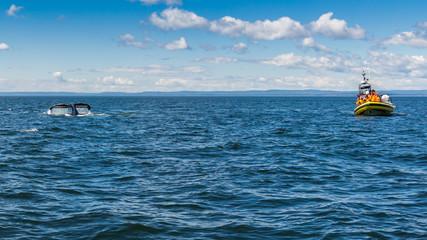 tourisme baleine