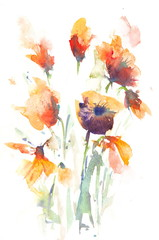 Blossom summer flowers on white, watercolor painting