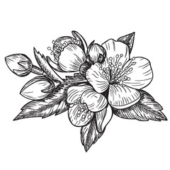 flowers and leaves of the apple tree . Vector sketch illustration . Hand painted