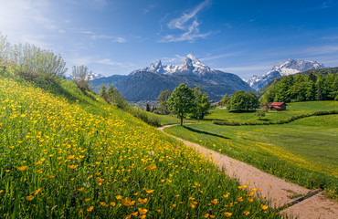 Wall Mural - Hiking trail in alpine scenery with blooming meadows in summer