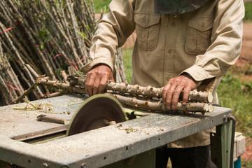 The Farmer is prepared Cassava for planting.