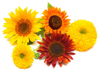 Bouquet of sunflowers flowers
