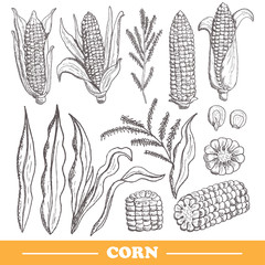 hand drawn corns set