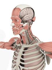 Human anatomy head and brain medical illustration on white background. 3d illustration