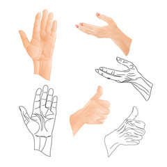 Human hands  drawing and outline set two vector illustration