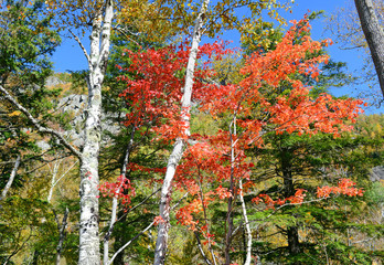 Autumn foliage with red, orange and yellow fall colors in the Adirondacks, New York State
